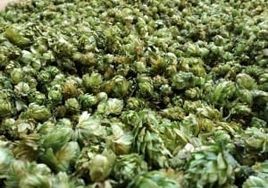The Bickle Farm - Valley Hops